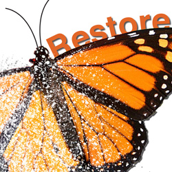 Restore-Poster